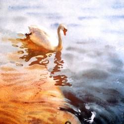 Swan at Mevagissey Slip
